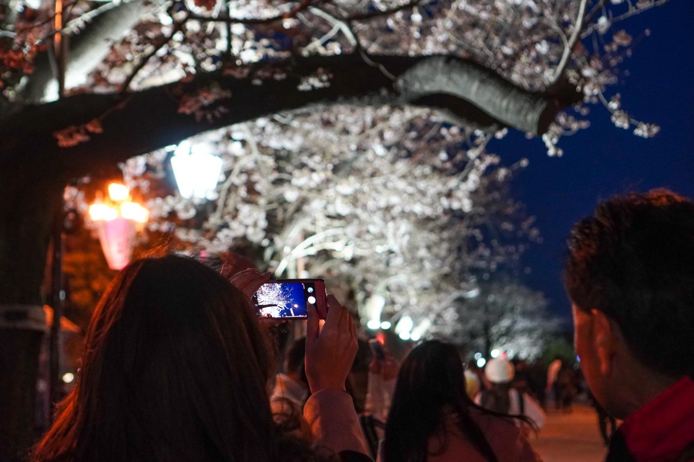kirsikankukat yöllä sumida-joella