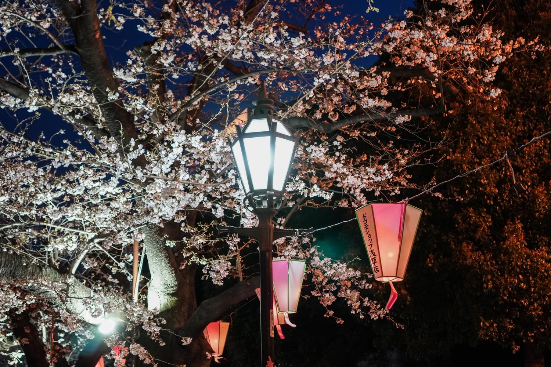 kirsikankukkia sumida-joella ja lamppuja
