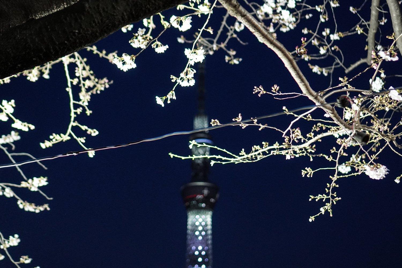 kirsikankukkia ja tokyo sky tree