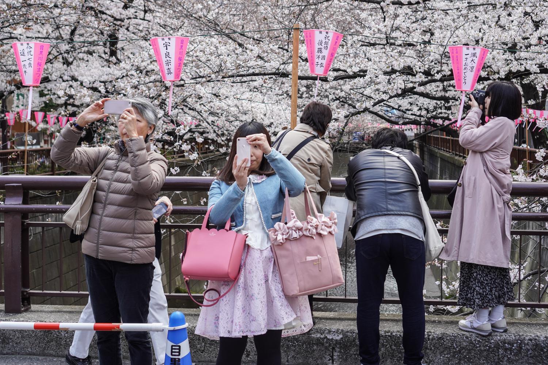 monta japanilaista kamerat käsissä kirsikankukkien keskellä