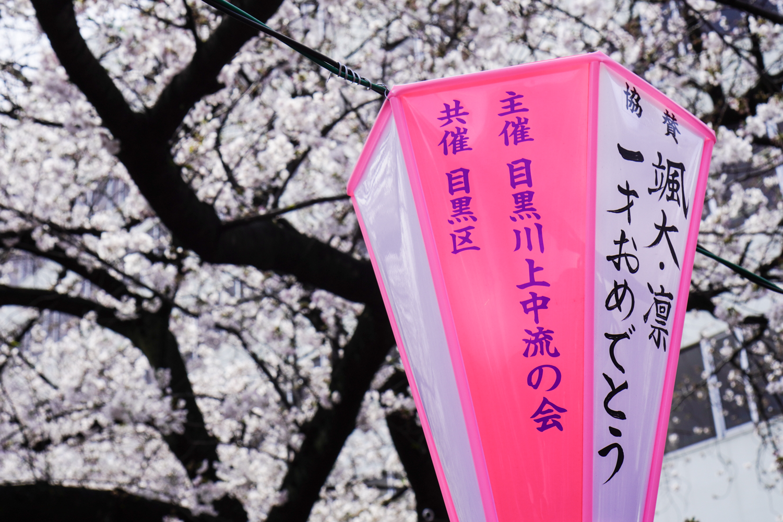 lamppu ja kirsikankukkia
