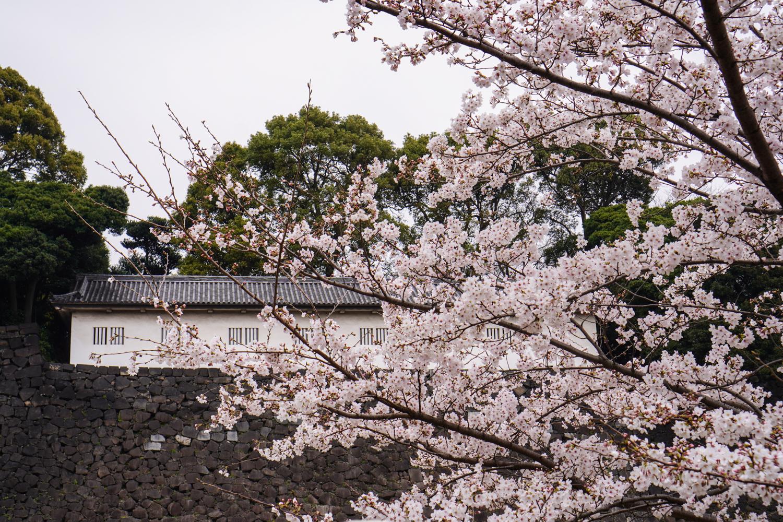sakura tokion keisarillisessa palatsissa