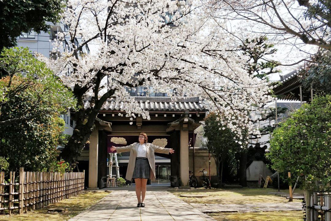 iida temppelin pihassa ja kirsikkapuu
