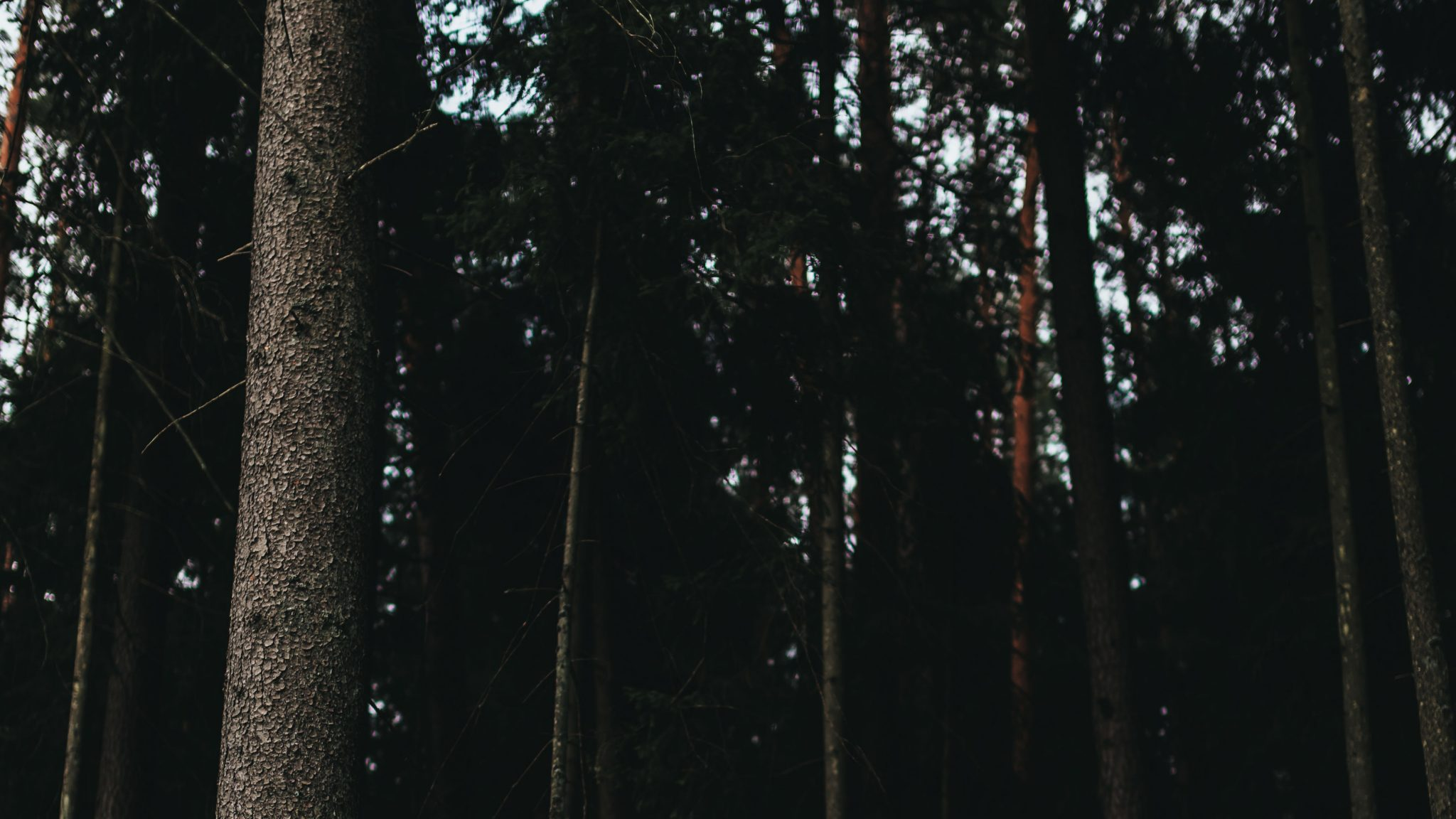 tumma kuva missä puita metsässä