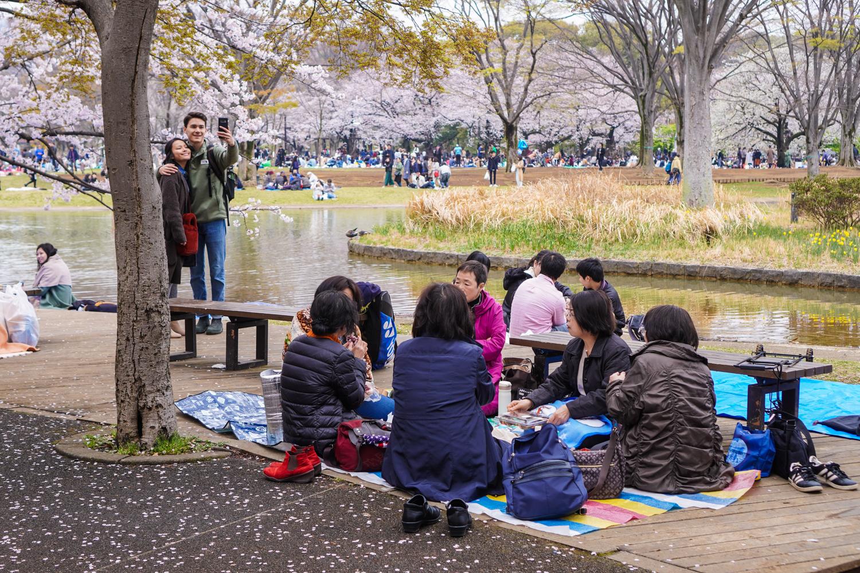 yoyogi-puiston hanamin juhlintaa, seurueita piknikillä
