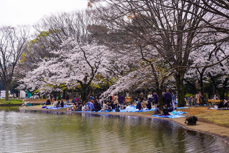 hanamia yoyogi-puistossa
