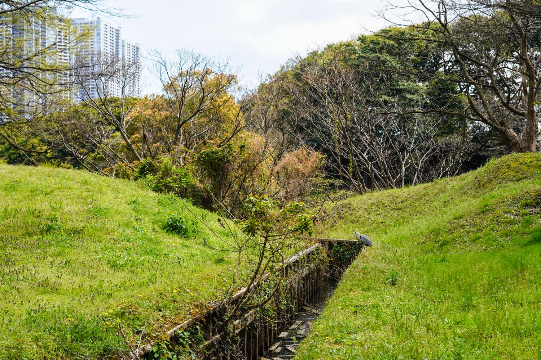 Hamarikyu-puutarhan oja