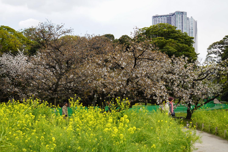 kukkaniitty hamarikyu-puutarhassa