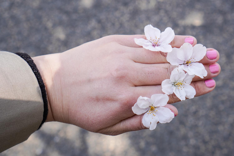 tipahtaneita kirsikankukkia sormien välissä