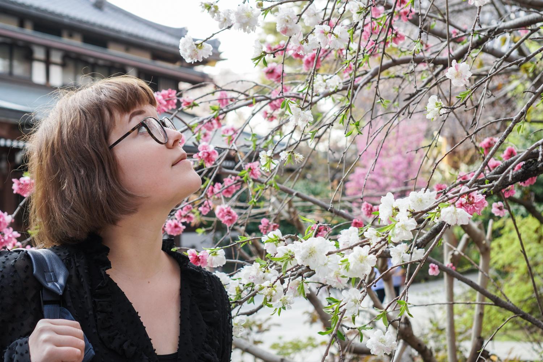 Iida ja kirsikankukat