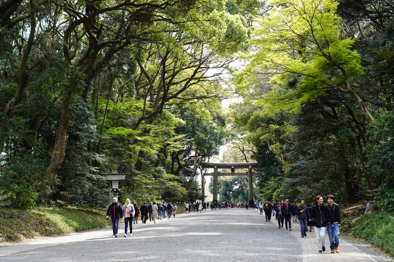ilmainen Tokio - Meiji Jingun portti ja metsää