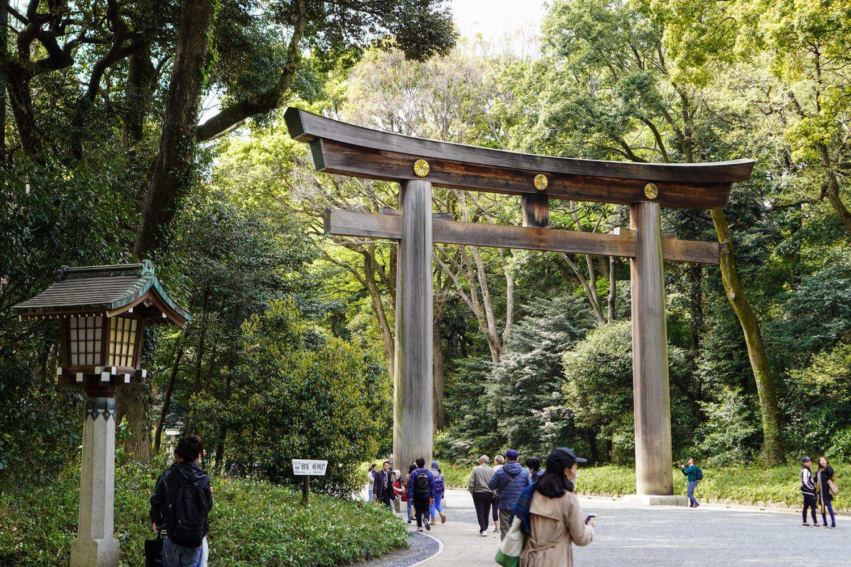 Meiji Jingun metsää ja torii-portti