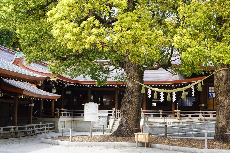 pyhä puu ja shintolainen olkiköynnös