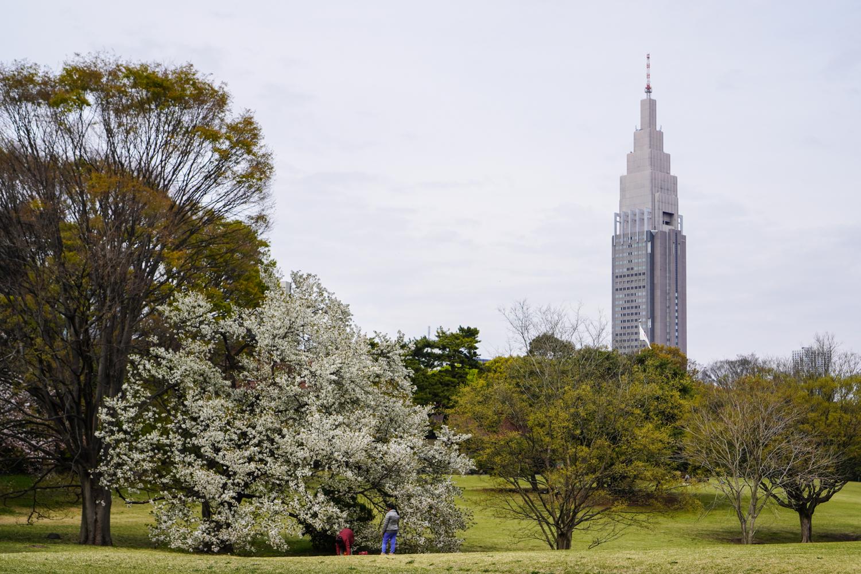Meiji Jingun puistoalueita ja Docomon pilvenpiirtäjä