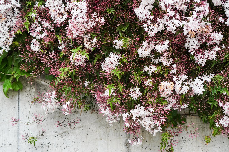 kukkia Tokion kaduilla