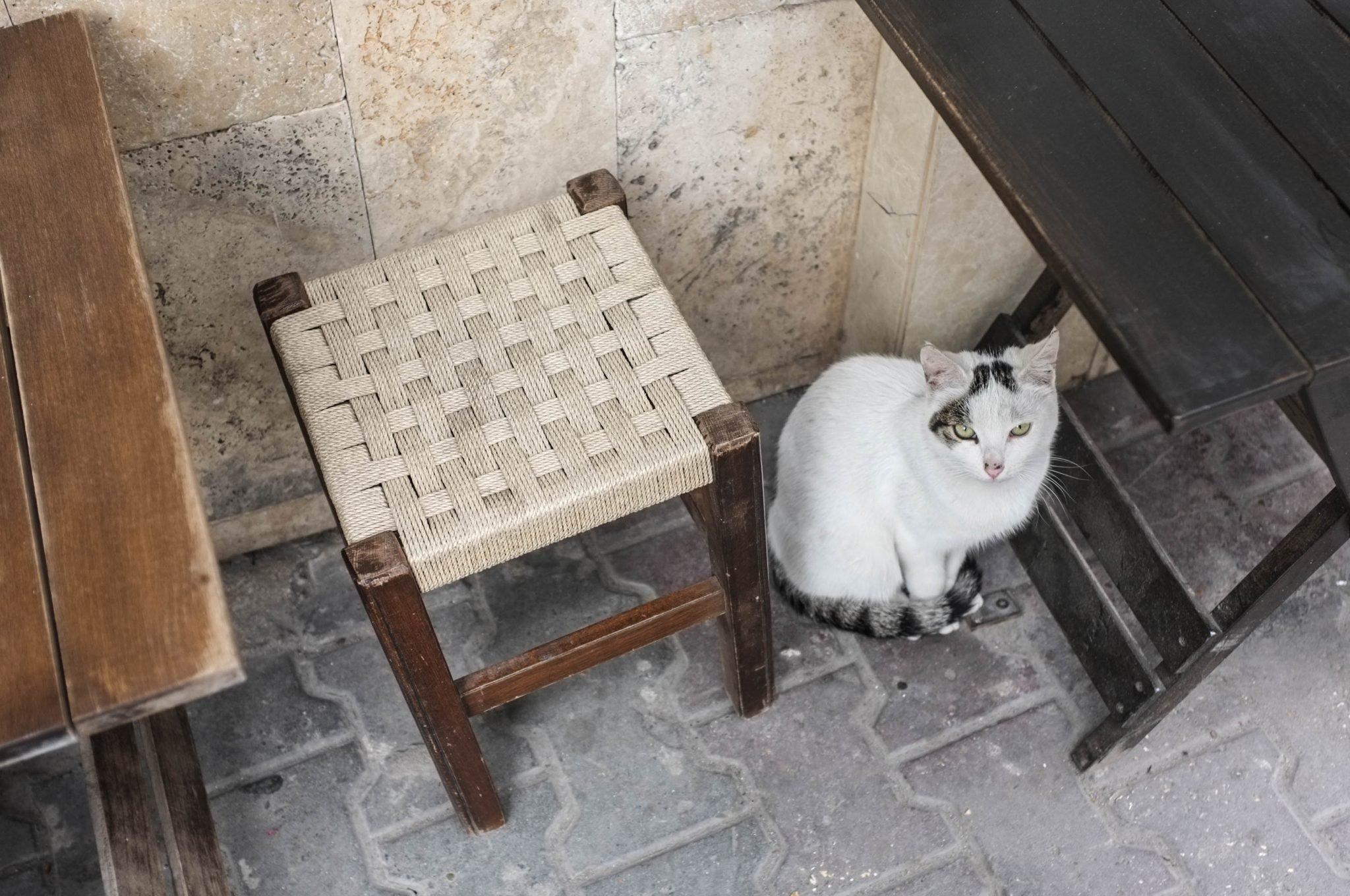 kissa ravintolan pöydän alla