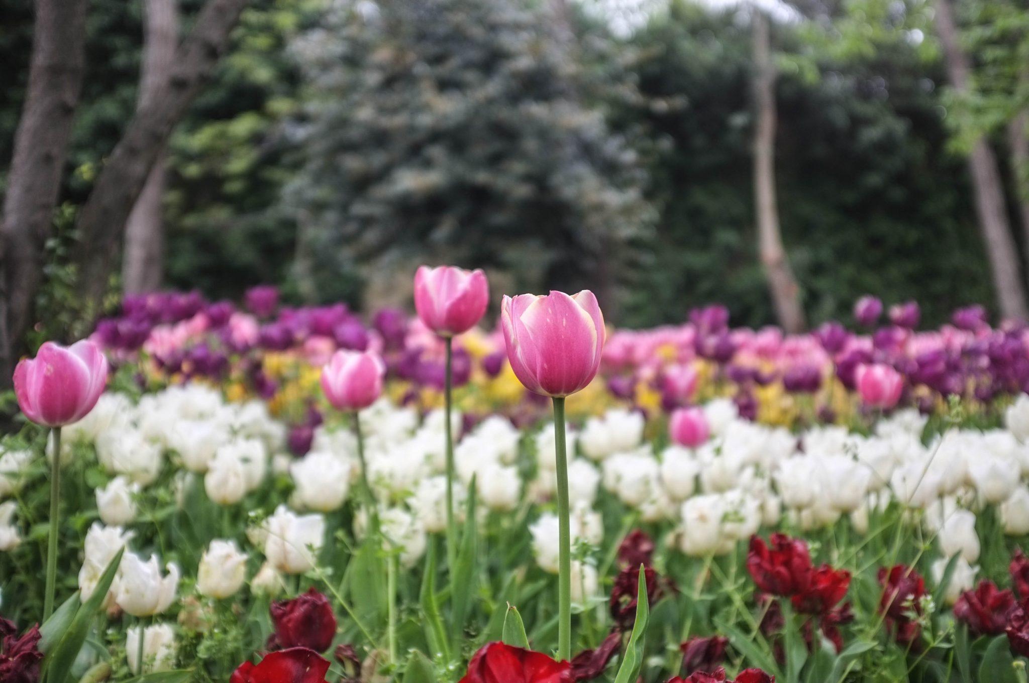 Istanbul kukkia