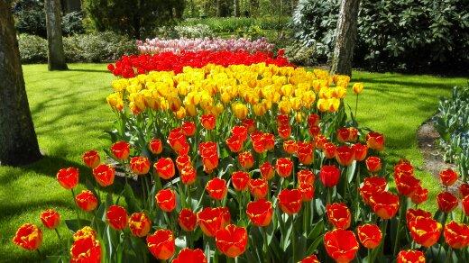 Tulppaanit, Hollanti, Alankomaat, kevät