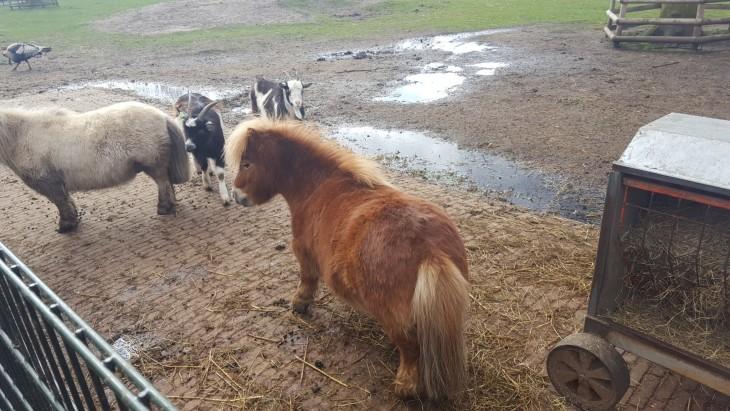 Poni petting zoo Amstelpark Amsterdam