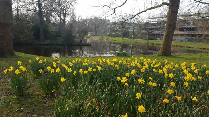 Alankomaat kevät kukat