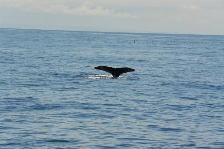 Valas San Diego Whale Watch risteily