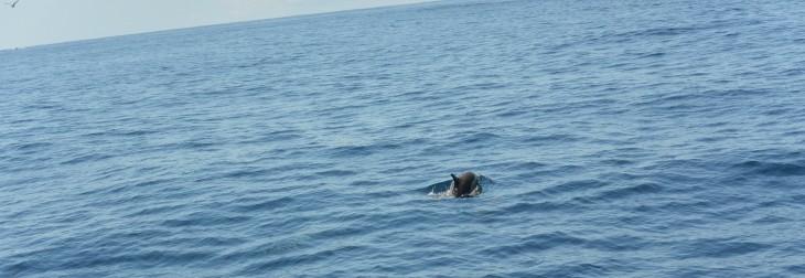 Delfiini valasristeily San Diego Whale Watch