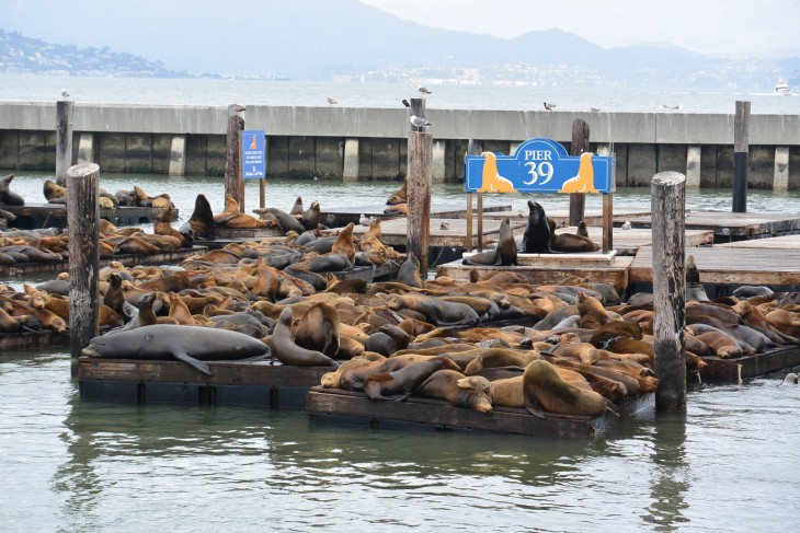 Merileijonat San Francisco Pier 39