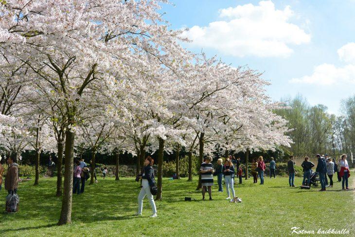Japanilainen puutarha Amsterdam