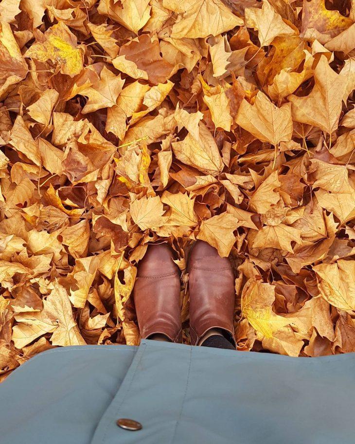 fall leaves fallcolors autumn herfst