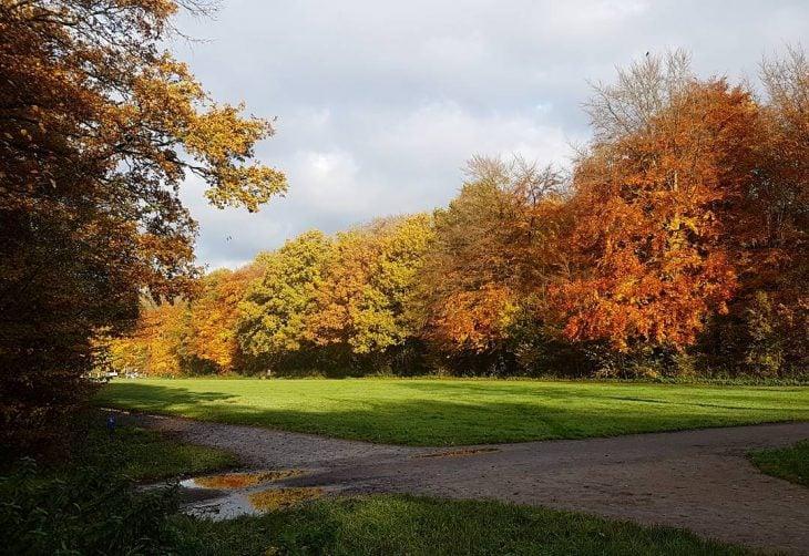 Color perfection  amsterdamsebos fall autumn iamsterdam herfst autumntrees netherlandshellip