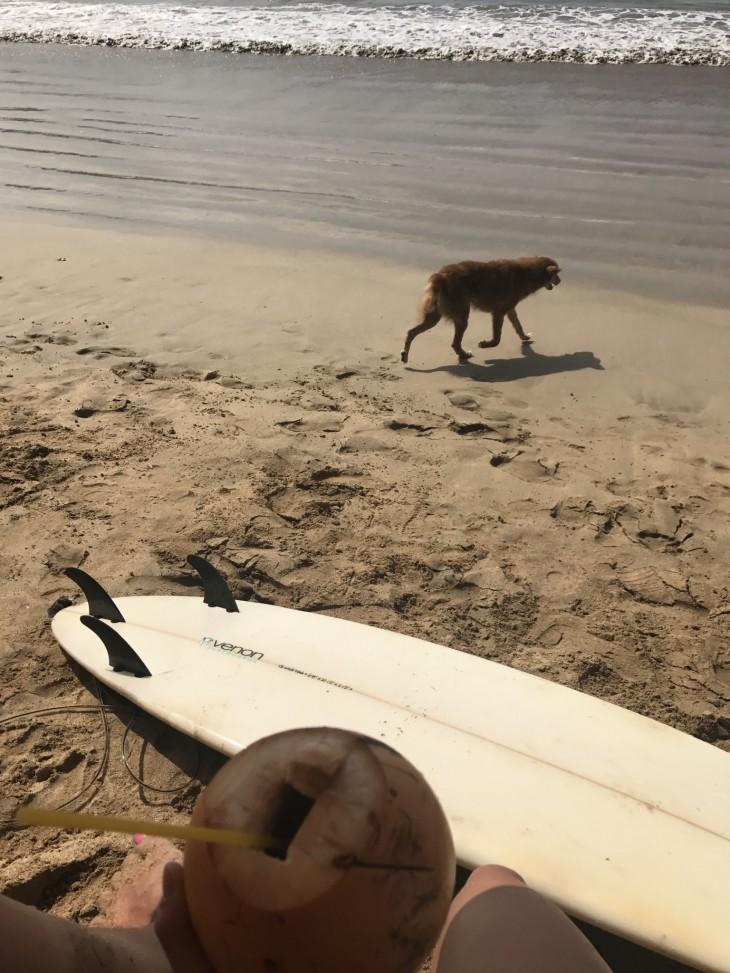 Gallessa kylmää coconuttii surffin jälkeen. Parasta!