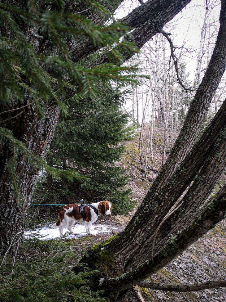 Maarian kivikautinen luontopolku talvella