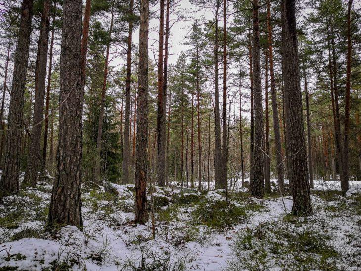 Luolavuoren metsissä