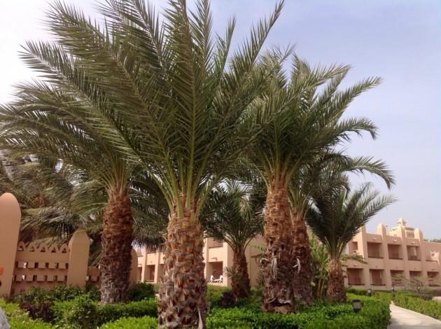 Palmujen takana yksi hotellin majoitusrakennuksista