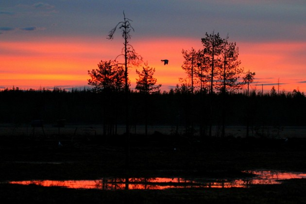 Aamuöinen auringonnousu