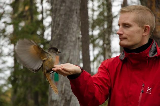 Kesy kuukkeli, kuva: Juha-Matti Tenhunen