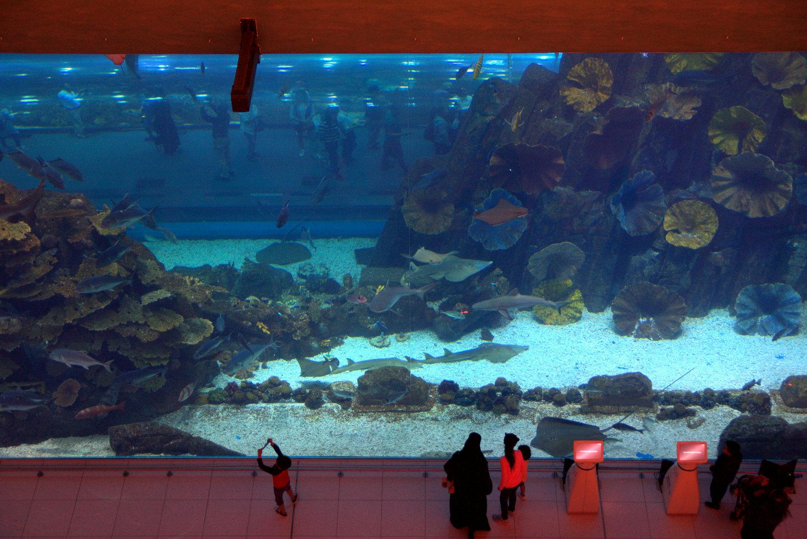 Dubai Mallista löytyy myös tällainen suuri akvaario. Akvaarion sisällä kulkee putki, johon pääsee kävelemään.
