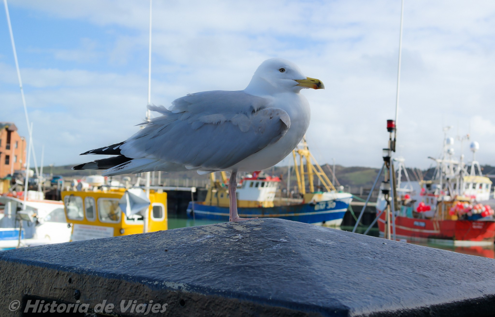 Padstow_2