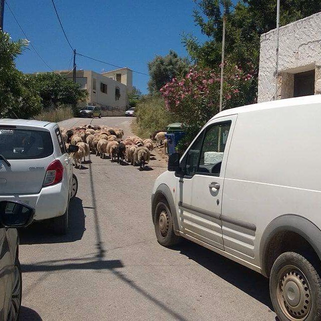 Cretan traffic jam visitchania chaniacrete katerinastravel thedscvrr Lue loppuun rarr
