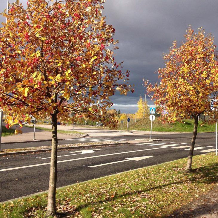Lovely autumn visitespoo Lue loppuun rarr