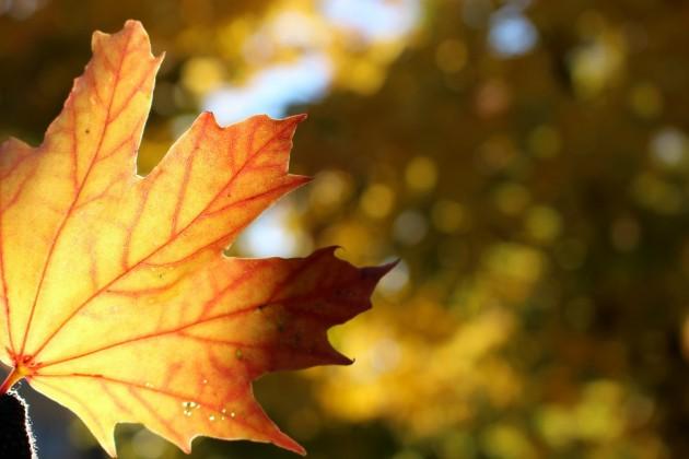 syksy ruska autumn colours Helsinki Finland