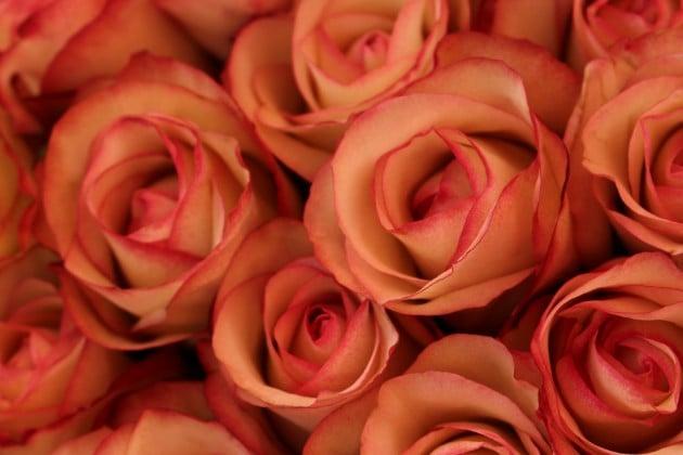 Ruusu roses Nizza Ranska kukkatori