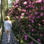 Right now in Helsinki! Amazing rhododendrons are blooming in Rhodoparkhellip