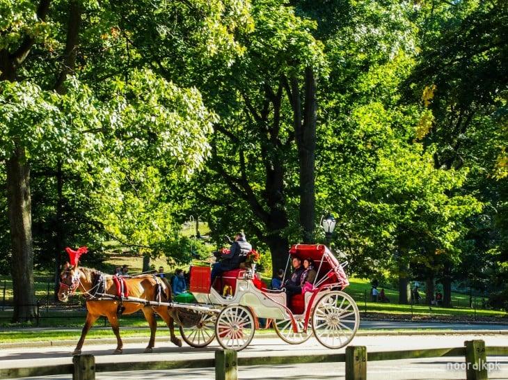 central_park_horse