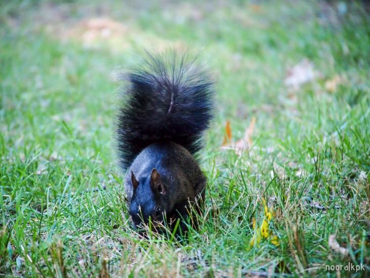 central_park_squirrel2