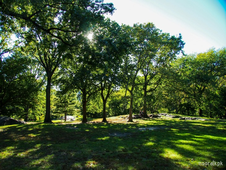 central_park_trees1