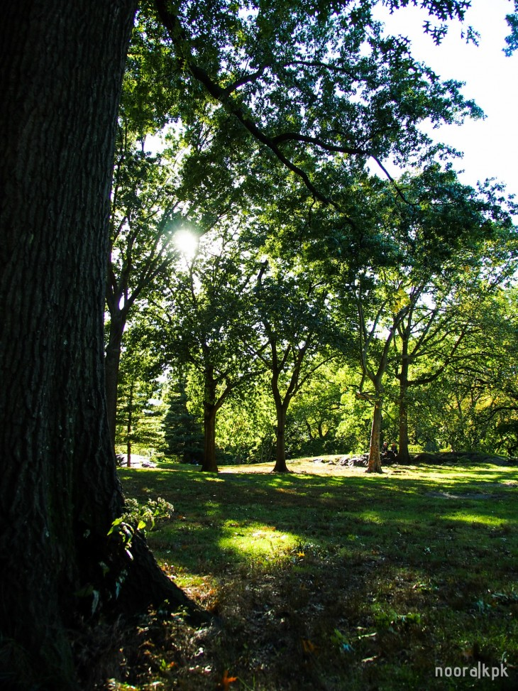 central_park_trees6