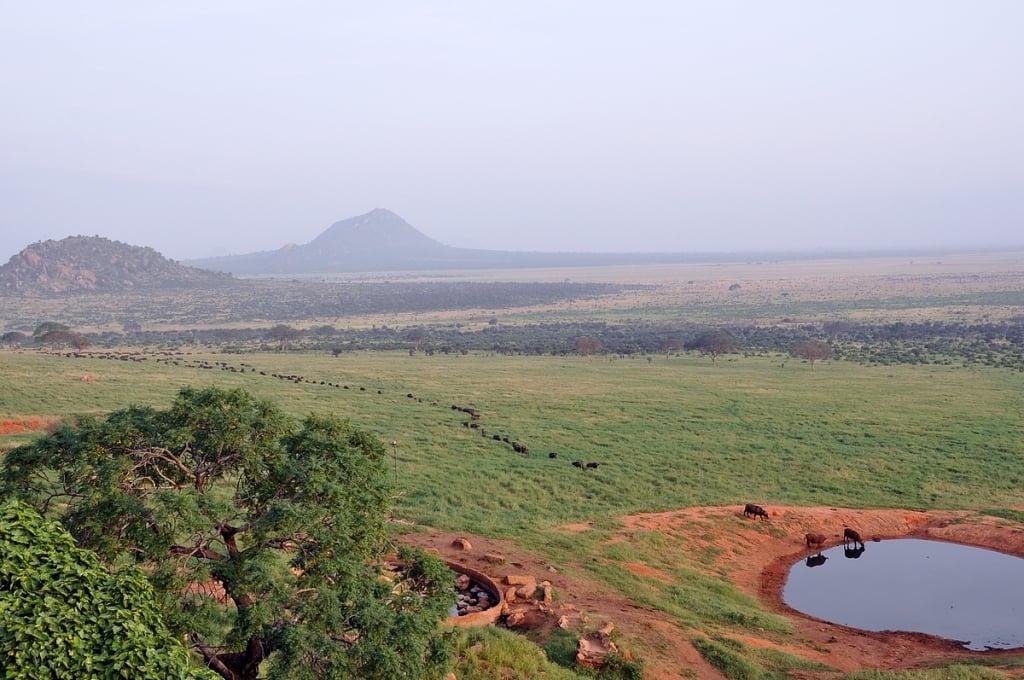 Viimeinen elefantti on lähtenyt, puhvelijono saapuu vesikuopalle. Voi safari Lodge, Tsavo East, Kenia.