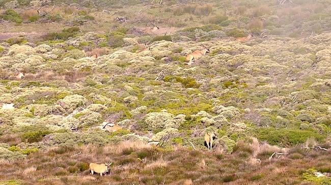 Erilaisia antilooppeja osui matkan varrelle