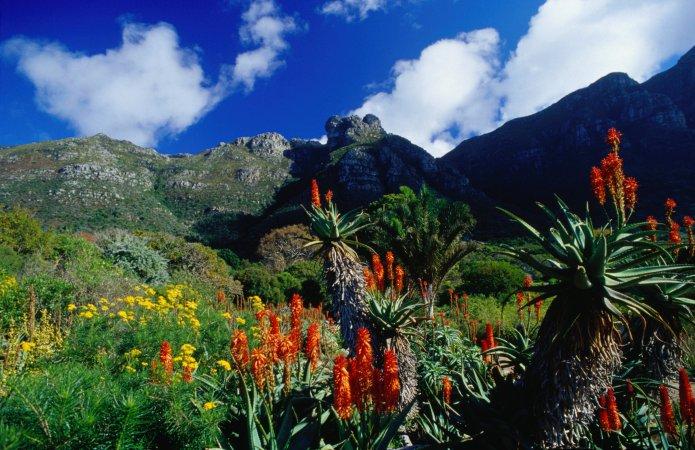 Kirstenboschin kasvitieteellinen puutarha copyright Lonely Planet
